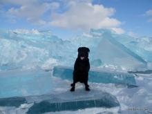 Jetta On Blue Ice Beaver Island Winter 2014